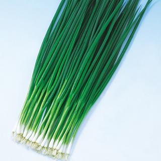 ネギ 種 【 くろかみ葱 】 種子 1L ( 種 野菜 野菜種子 野菜種 )