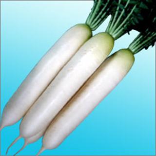 大根 種 【 ともしび 】 種子 2dl缶 ( 種 野菜 野菜種子 野菜種 )