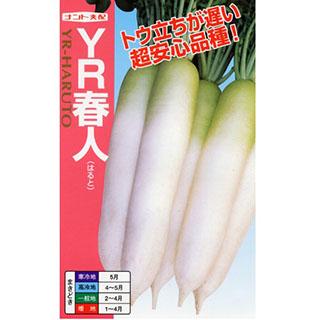 大根 種 【 YR-春人 】 種子 2dl ( 種 野菜 野菜種子 野菜種 )
