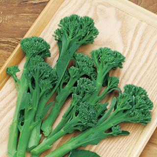 茎が細くてやわらかい茎ブロッコリー 茎ブロッコリー 種 秀逸 10ml グリーンボイス 買収 茎ブロッコリーの種