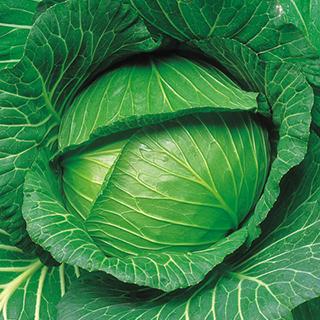 キャベツ 種 【 YR寒山 】 種子 5千粒コートL ( 種 野菜 野菜種子 野菜種 )