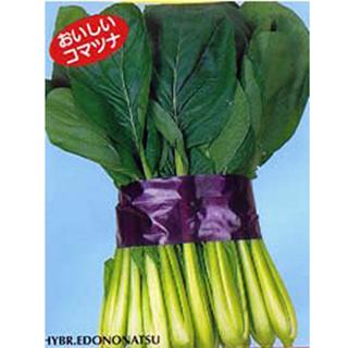 小松菜 種 【江戸の夏1L缶】 1L缶 ( 種 野菜 野菜種子 野菜種 )