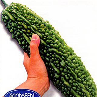ゴーヤ 種 【沖縄願寿ゴーヤー】 1L ( 種 野菜 野菜種子 野菜種 )