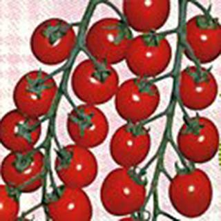 ミニトマト 種 【チャプリン2号】 1,000粒 ( 種 野菜 野菜種子 野菜種 )