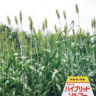 根張りがよく 有機質を豊富に生産する 緑肥 種 1kg ハイブリッドソルゴー 緑肥の種 低廉 格安激安