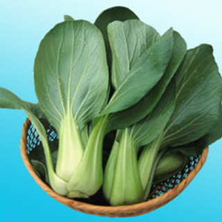 ちんげん菜 種 【 ニイハオ・シャン 】 種子 2dl ( 種 野菜 野菜種子 野菜種 )