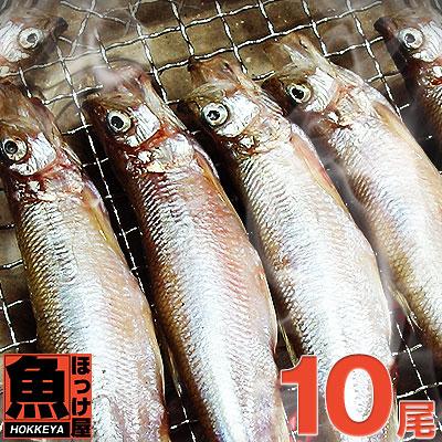 (人気激安) 解禁まぢかのししゃもの事を水産業界であぶら柳葉魚 ししゃも と言います あぶら柳葉魚 北海道 広尾産 特大サイズ 10尾 ししゃもメス 解禁まぢかの 現品 本ししゃも