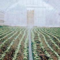 スミサンスイR-育苗 120m ( 水やり 水撒き ビニールハウス ハウス 灌水チューブ 散水チューブ チューブ 潅水 散水チューブ 潅水チューブ 散水用品 農業資材 園芸用品 農業用 園芸 ガーデニング 用品 ガーデニング用品 ガーデン用品 農作業 便利 グッズ )