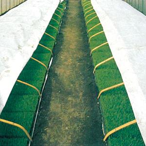 ラブシート20307白 厚さ0.13mm×長さ50m×幅150cm ( トンネル栽培 不織布 農業用不織布 トンネル用 保温シート 農業資材 保温資材 農業用資材 園芸用資材 園芸資材 ガーデニング ガーデン用品 農作業 家庭菜園 便利 グッズ)