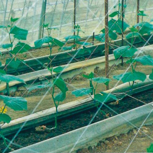 キュウリネット 白緑 売買 18cm目×幅420cm×長さ18m おしゃれ
