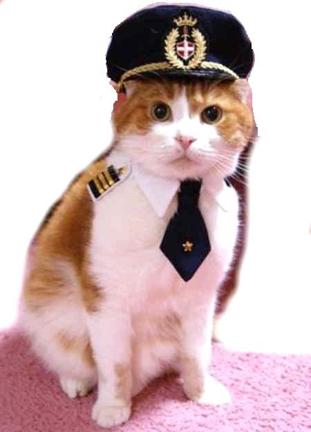 The clothes of the cat  I pilot (^^ ? badge tie shirt (hat separate sale) catware cat clothes costume play intermediate person  sc 1 st  Rakuten & Nyans Collections   Rakuten Global Market: The clothes of the cat