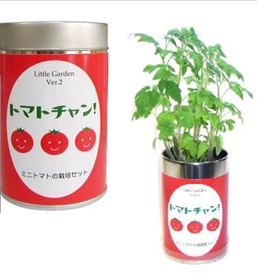 カワイイ緑を育てませんか? 栽培セット リトルガーデン 感謝価格 人気ショップが最安値挑戦 トマトチャン