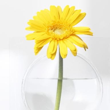 KAki フラワーベース3個セット! 【宙に浮かんだ様に見える花瓶】 +d (プラスディー)(Kaki Flower Vase) 貼って飾れる花瓶! 玄関、玄関の姿見、洗面所の鏡、リビング、寝室にGOOD♪ カラーは組み合わせ自由! 送料無料