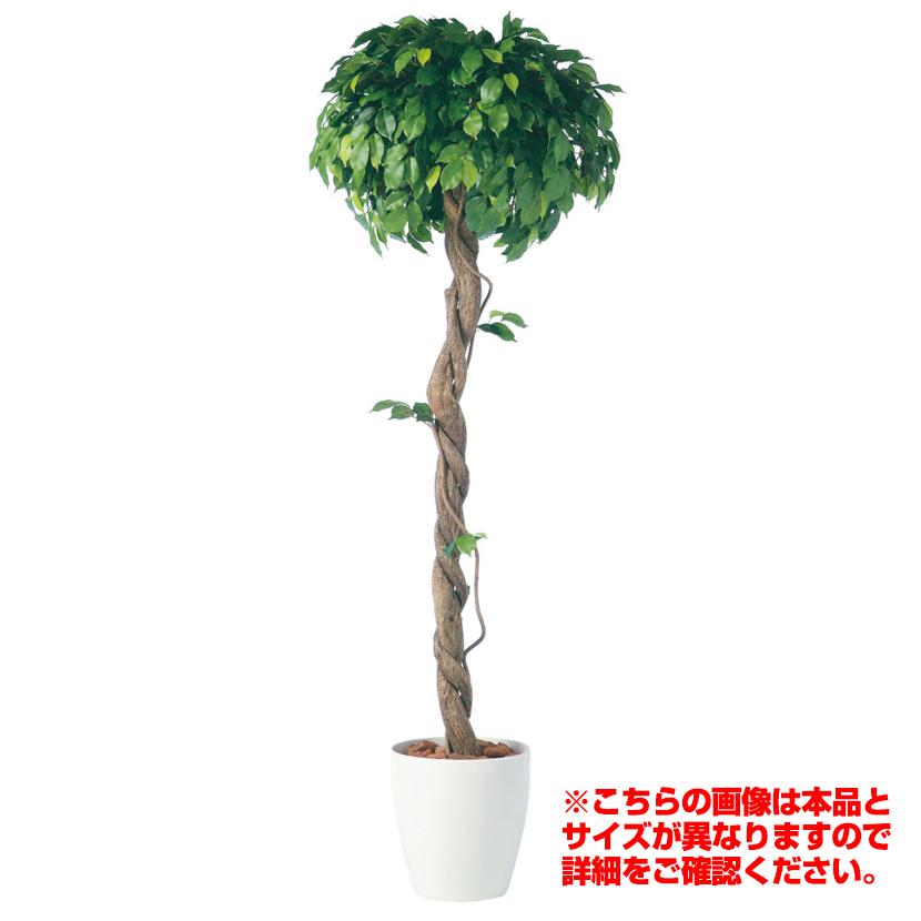 観葉植物 人工 人工 樹木 樹木 フィッカスベンジャミナシングル Lサイズ 高さ2000mm Lサイズ 鉢:RP-370, 海南町:b10316a7 --- krianta.ru