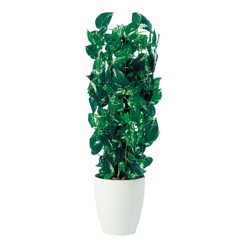 観葉植物 人工 樹木 ポトスヘゴ 高さ900mm SSサイズ 鉢:RP-225
