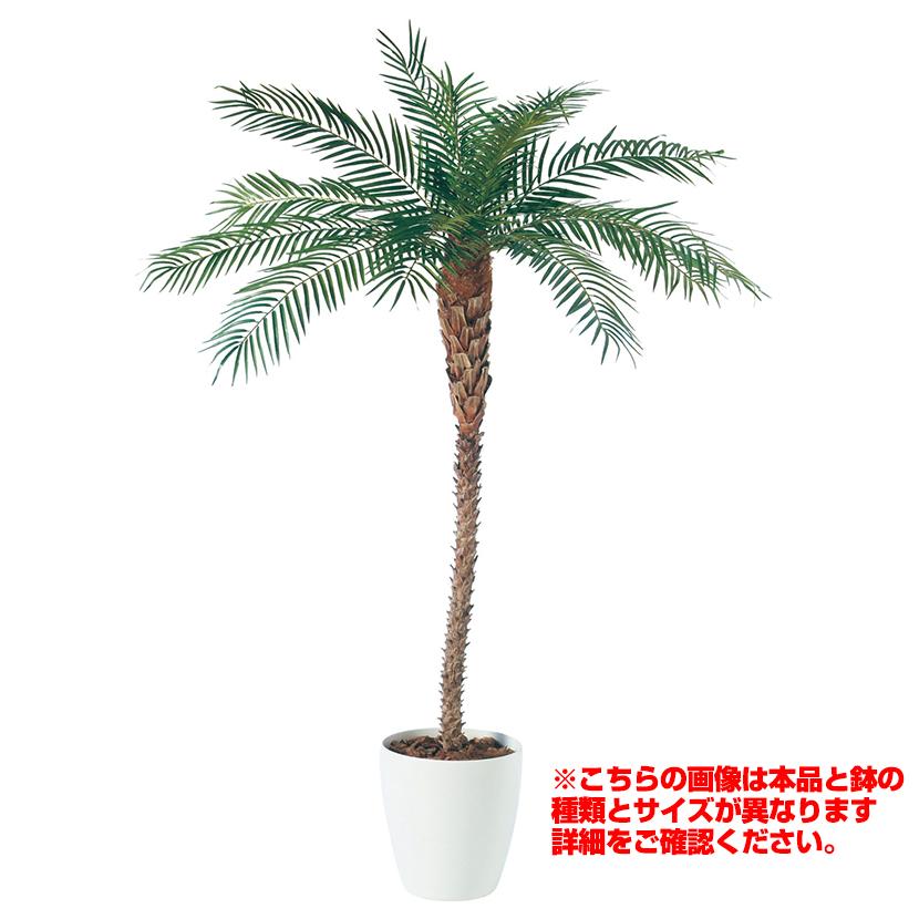 観葉植物 人工 樹木 フェニックス(天然幹) 高さ2500mm LLサイズ 鉢:懸崖11号