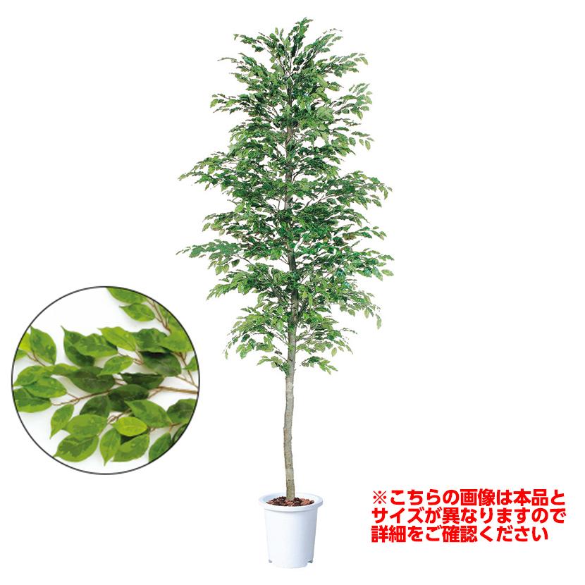 観葉植物 人工 樹木 ベンジャミナスプラッシュセパレート 高さ3000mm LLサイズ 鉢:懸崖13号