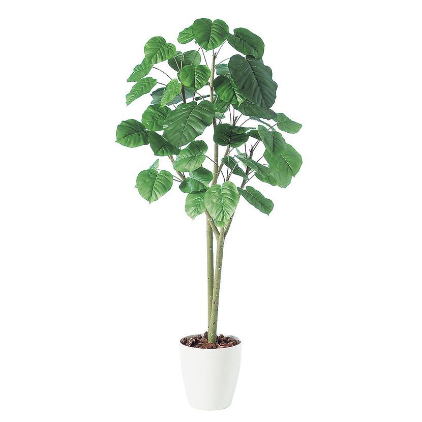 観葉植物 人工 樹木 ウンベラータ2本立 高さ1800mm Lサイズ 鉢:RP-300