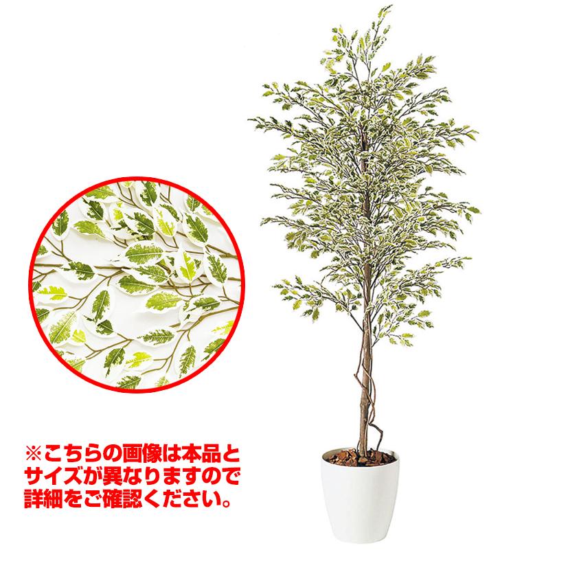 観葉植物 人工 樹木 ベンジャミナスターライト 高さ2000mm Lサイズ 鉢:RP-300