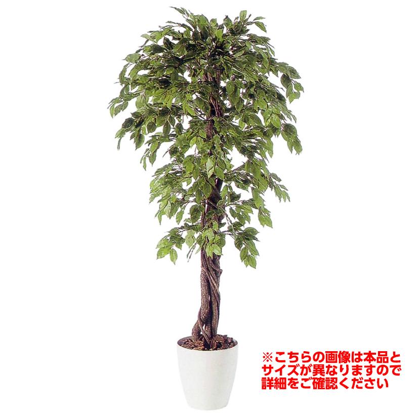 観葉植物 人工 樹木 ベンジャミナスプラッシュリアナ 高さ1500mm Mサイズ 鉢:RP-300