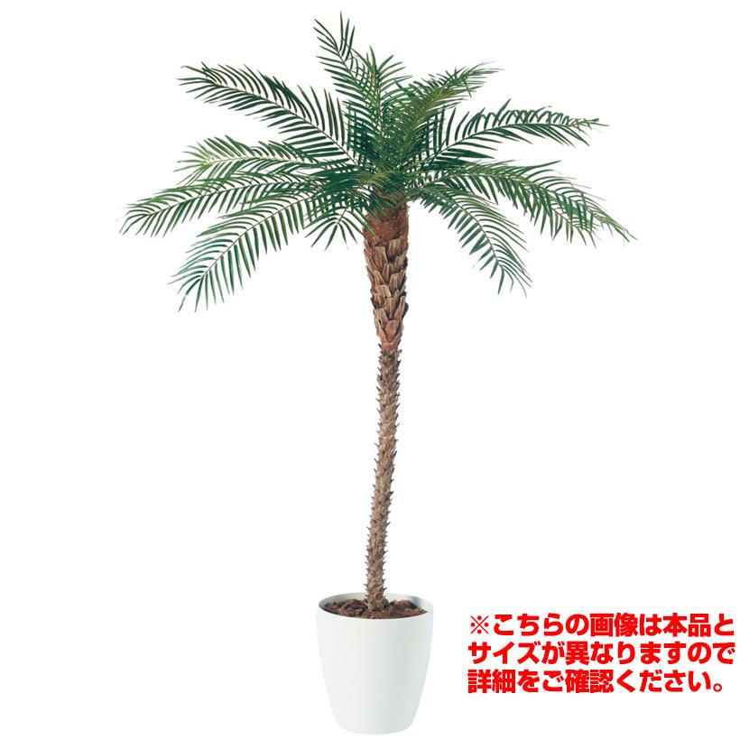 観葉植物 人工 樹木 フェニックス(天然幹) 高さ2500mm LLサイズ 鉢:RP-370