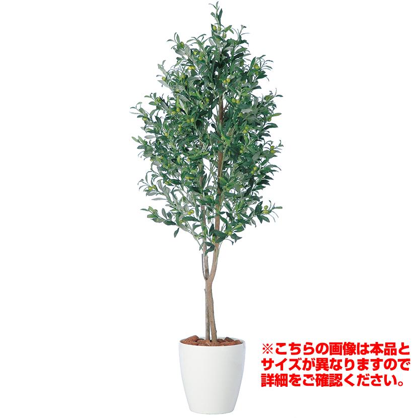 観葉植物 人工 樹木 ライプオリーブデュアル 高さ2000mm Lサイズ 鉢:RP-300
