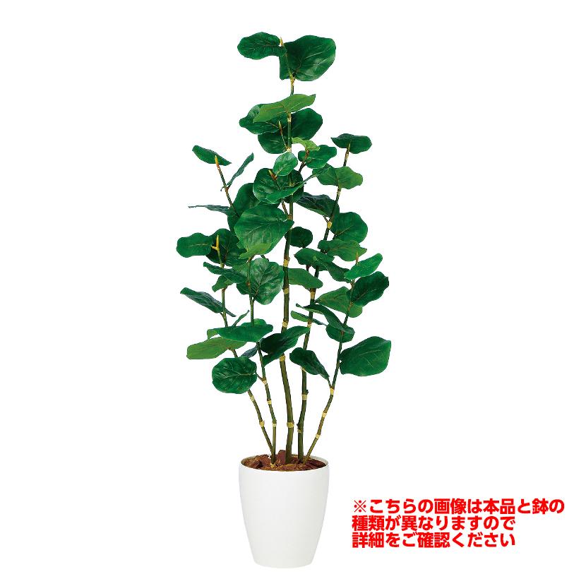 観葉植物 人工 樹木 シーグレープ 高さ1300mm Sサイズ 鉢:懸崖7号