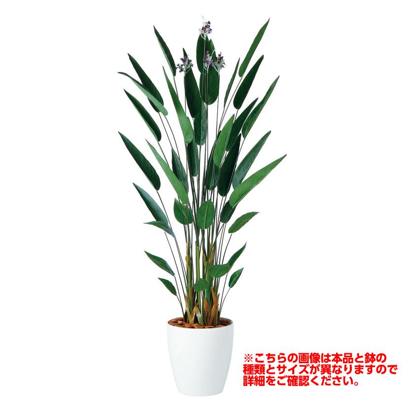 観葉植物 人工 樹木 カンナ 高さ1500mm Mサイズ 鉢:簡易ポット