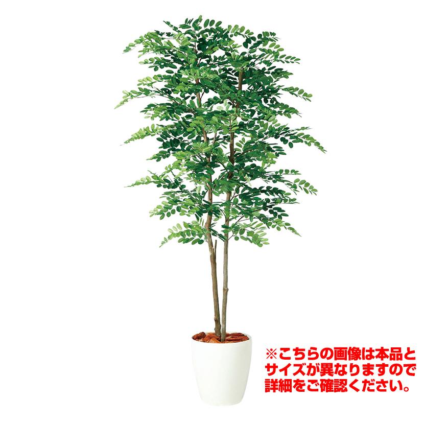 観葉植物 人工 樹木 アカシアデュアル 高さ1500mm Mサイズ 鉢:RP-265