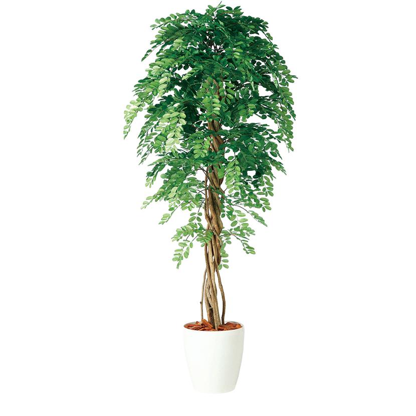 観葉植物 人工 樹木 アカシアリアナ 高さ1800mm Lサイズ 鉢:RP-300