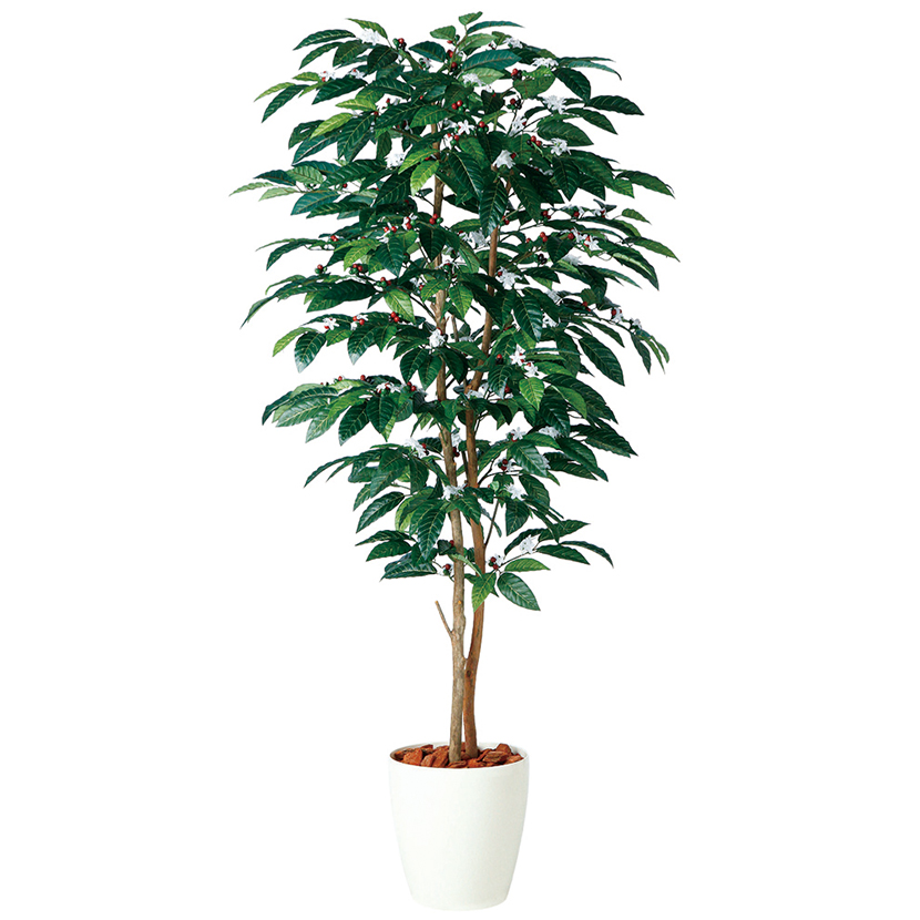 観葉植物 人工 樹木 コーヒーデュアル 高さ1800mm Lサイズ 鉢:RP-300
