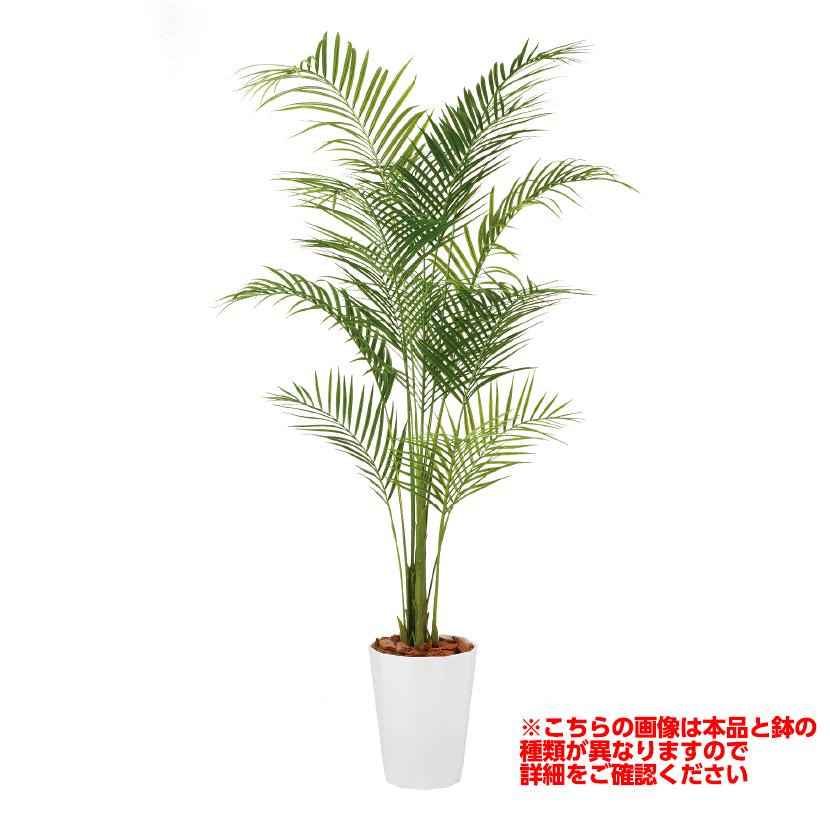 観葉植物 人工 樹木 アレカヤシ PE 高さ1900mm Lサイズ 鉢:簡易ポット