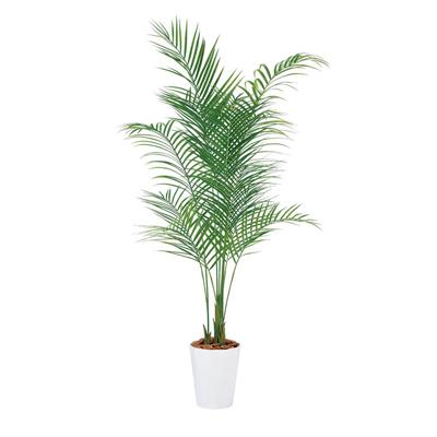 【お買得】 人工 樹木 鉢:クオーツ240:激安オフィス家具オフィスコム 高さ1800mm 観葉植物 アレカヤシPE Lサイズ-花・観葉植物