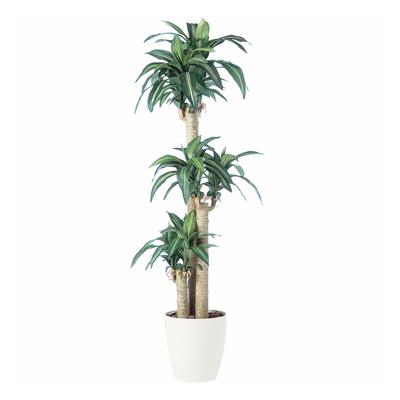 """観葉植物 人工 樹木 マッサンゲアナ""""幸福の木"""" 高さ1700mm Mサイズ 鉢:RP-300"""