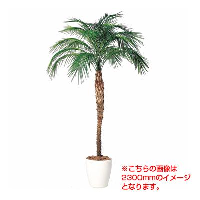 観葉植物 人工 樹木 フェニックス・ロベレニー 高さ2000-3000mm LLサイズ 高さ指定可能 鉢:RP-370
