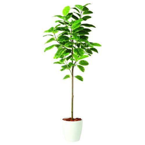 送料無料 代引不可【アルテシマ FST RP鉢タイプ】W70cm×H200cmフェイクグリーン 人工観葉植物 インテリアグリーン オフィスグリーン 人工樹木 造花アルテシマ