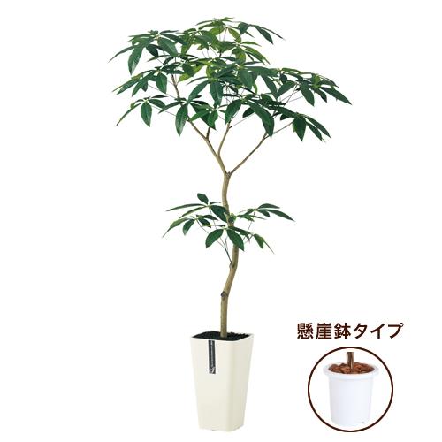 送料無料新商品【 パキラ FST 懸崖7号 】W80×H150cmフェイクグリーン 人工観葉植物 インテリアグリーン オフィスグリーン 人工樹木 造花パキラ