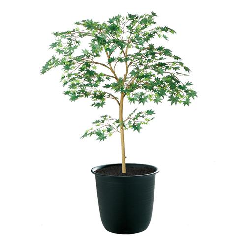 送料無料【ヤマモミジ GREEN FST ツリー6(BK)】W70cm×H100cmフェイクグリーン 人工観葉植物 インテリアグリーン オフィスグリーン 人工樹木 造花モミジ/紅葉