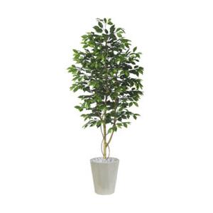 ベンジャミン 高さ180cm 観葉植物 インテリア 開店祝い 引越し祝い 手入れ不要 OA PLANTS