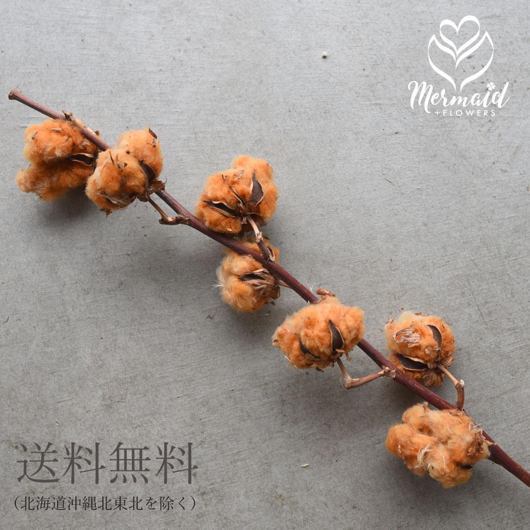 もこもこ 茶色い綿の実 かわいい ナチュラルな綿の実枝付きのドライフラワー インテリアやディスプレイに 全品ポイント5倍 9 5 18:00~23:59限定 生花ドライ エダモノ 至上 コットン 綿 茶色 1本 綿の実枝つき 材料 40%OFFの激安セール コットンフラワー 花材 ドライフラワー 綿花 クリスマス リース ブラウン 素材 テディベアコットン 切花