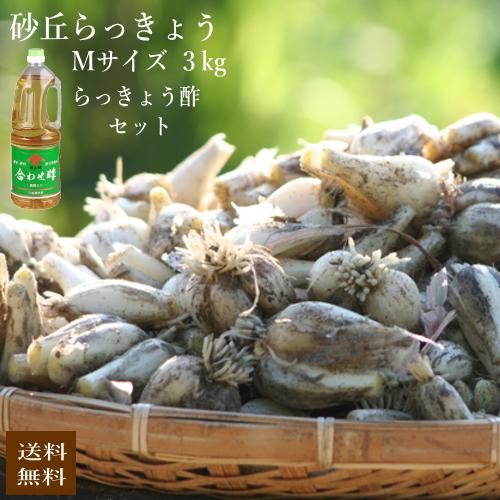(Mサイズ)砂丘らっきょう3kgとらっきょう酢セット【5月初旬より発送開始】鹿児島県産 ラッキョウ 砂付き 生らっきょう 甘酢漬けセット