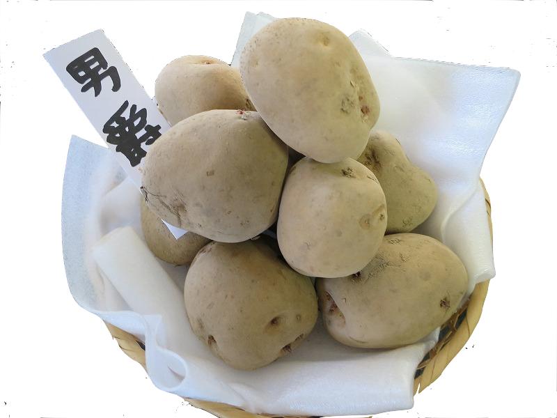 送料無料 北海道産 おしゃれ 春じゃがいも種子 男爵1kg 種芋です 新生活 定番のじゃがいもで作りやすいです