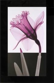 スティーブン・N・マイヤーズ「スティーム4」 ガラストップアート g-1