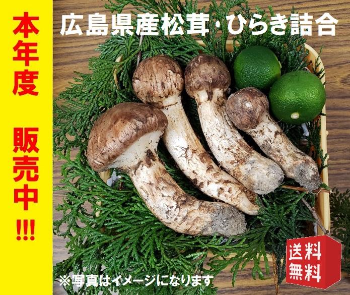 2019年度 広島県産松茸、ひらき詰合 約270g【100g 11,000円計算】※送料無料※