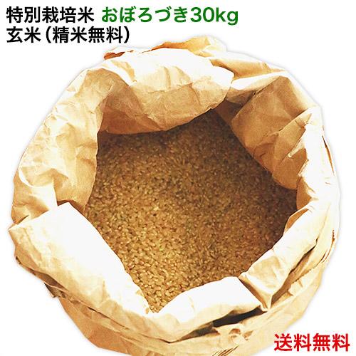 【新米 30年産】北海道米 特別栽培米 おぼろづき(玄米30kg/精米無料)北海道米/減農薬
