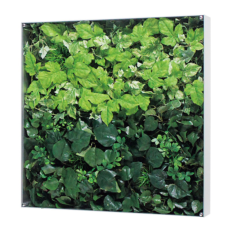 ベルク インテリアパネル インテリアデコ ウォールグリーン GR3115 室内 壁 インテリア おしゃれ 送料無料 緑 植物