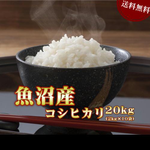 米 お米 2kg×10袋 魚沼産 コシヒカリ 令和元年産 送料無料