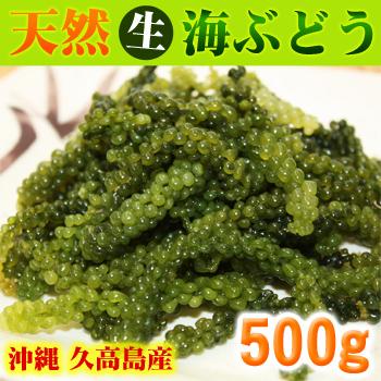 冲绳久高岛生产!(生)天然的海葡萄500g(品种:fusaiwazuta) ※有shikuwasa含果汁海葡萄的佐料! ※是常温发送!不可以与冷冻、冷藏品的同装。