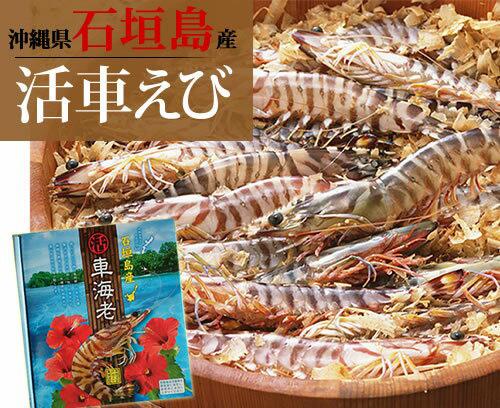 【送料無料】石垣島活き車エビ1kg(26~33尾)|お歳暮|ギフト|おせち[食べ物>海産物>エビ]