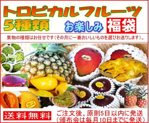 沖縄特産フルーツ>フルーツセット